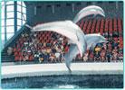 dolphinarium.jpg