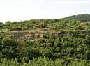 Хълмът Трапезица